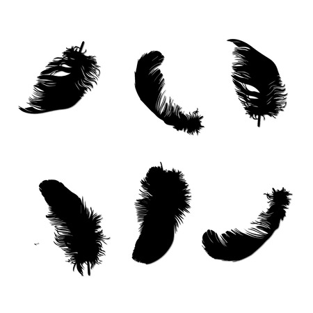 feather: feather