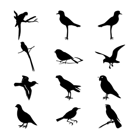 Bird Vectores