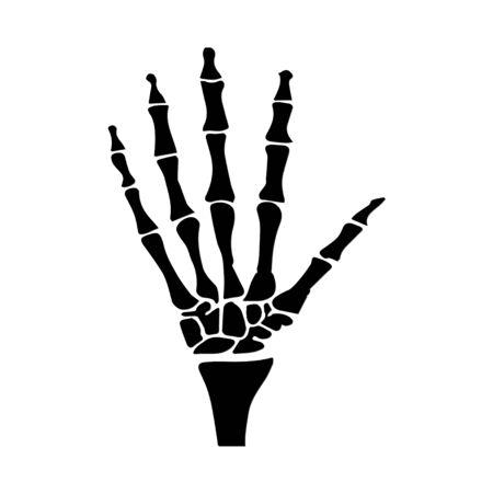 anatomical: hand anatomical Illustration
