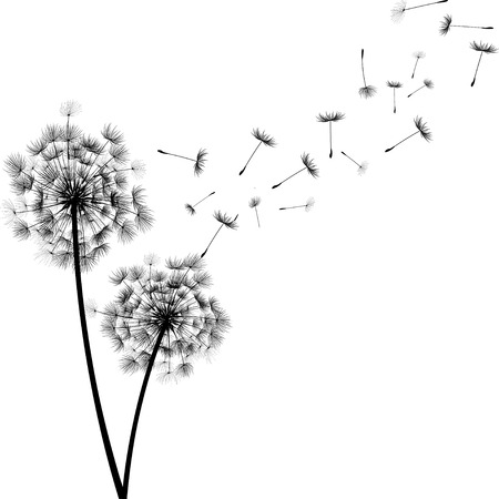 Les graines de pissenlit  Banque d'images - 41012923
