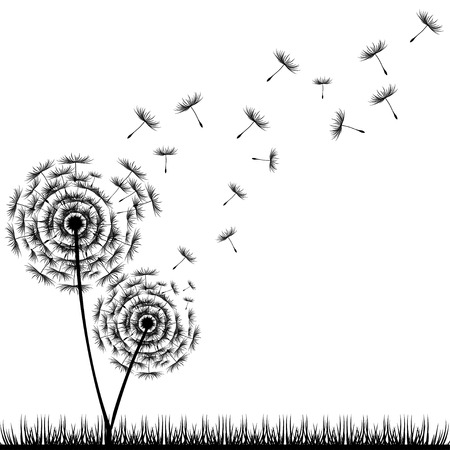dandelion: Dandelion Seeds