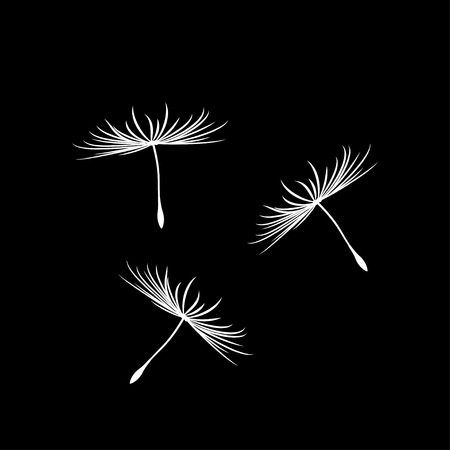 plant delicate: Dandelion Seeds