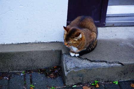 Cat on a corner step, Iceland