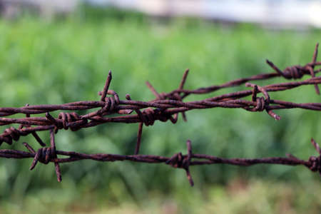 Rusty barbed wire isolated on green background.