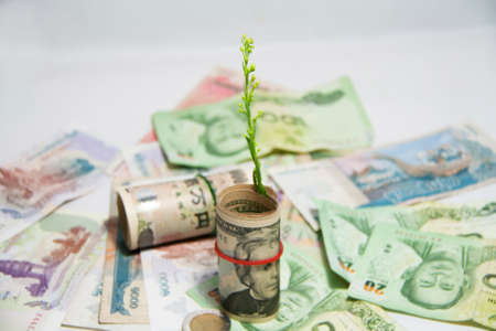 The concept of money growth, Green tree sprouting from roll US banknotes and use a rubber band with out focus roll Japanese banknotes and pile of Thai, Cambodian banknotes on white background. Stock Photo