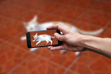 Hand with mobile phone take a photo of white cat with a little bit orange color lying down on brown floor. 免版税图像