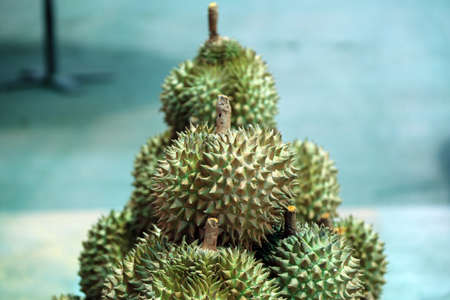 Pile of Durian, an oval spiny tropical fruit containing a creamy pulp. it is highly esteemed for its flavor.