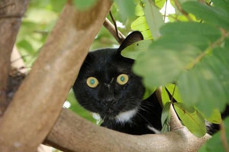 Black and white color cat (Black is mostly White points are small) with green eyes on the tree. The stray cat climbing up on the tree. Stock Photo