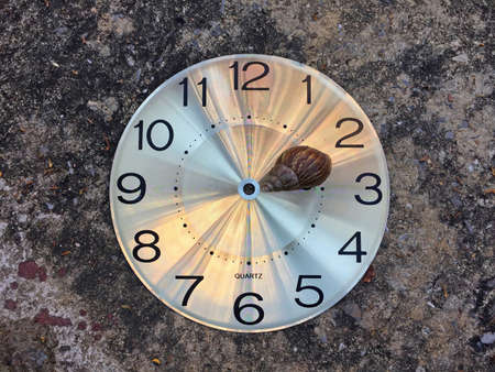 Snail on the round watch face no clock hands on the floor. Concept of slowly. Stock Photo