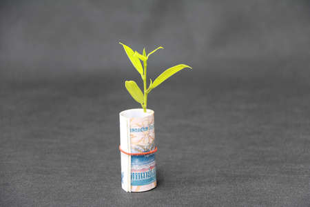Rolled banknote money one thousand Cambodian Riel and young plant grow up with dark grey floor and background. Concept of money growth or currency interest.