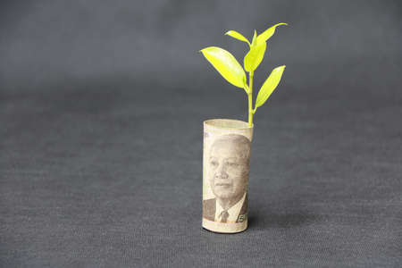 Rolled banknote money five thousand Cambodian Riel and young plant grow up with dark grey floor and background. Concept of money growth or currency interest. Stok Fotoğraf