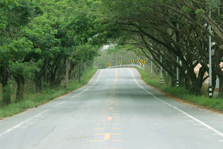 Road through the tree tunnel, Empty street and trees that bend over the road.
