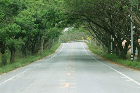 Straße durch den Baumtunnel, leere Straße und Bäume, die sich über die Straße biegen.