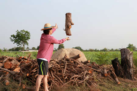 Man farmer throwing timber into the firewood stack at the sugarcane farm and wearing a straw hat with red long-sleeved shirt.
