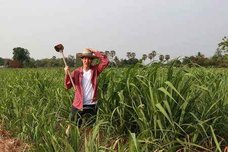 Granjero de hombre con azada en mano trabajando en la finca de caña de azúcar y vistiendo un sombrero de paja con camisa roja de manga larga.