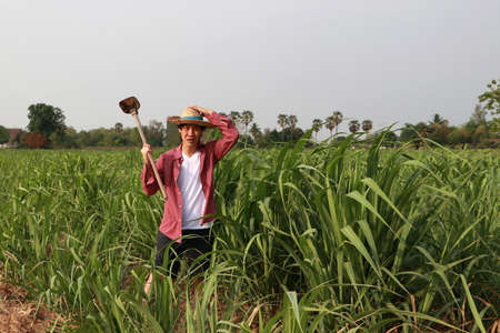 Man farmer with hoe in hand working in the sugarcane farm and wearing a straw hat with red long-sleeved shirt.