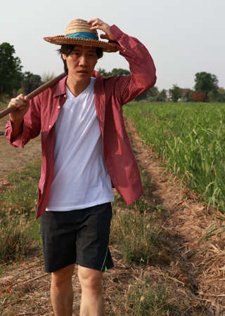 Man farmer with hoe in hand walking in the sugarcane farm and wearing a straw hat with red long-sleeved shirt. Stock Photo