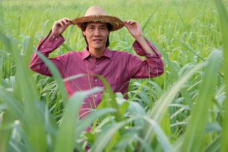 Man farmer standing with two hands on his hat and wearing red long-sleeved shirt in the sugarcane farm.