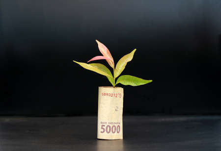 Rolled banknote money five thousand Indonesia Rupiah and young plant grow up with black background. Concept of money growth or currency interest.