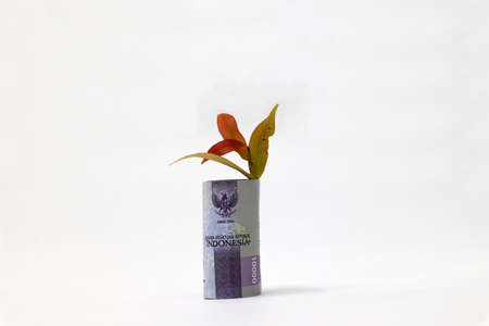 Rolled banknote money ten thousand Indonesia Rupiah and young plant grow up with white background. Concept of money growth or currency interest. Reklamní fotografie