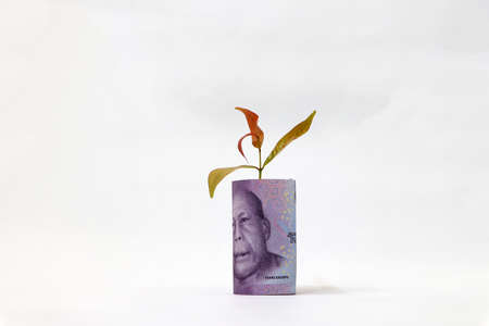 Rolled banknote money ten thousand Indonesia Rupiah and young plant grow up with white background. Concept of money growth or currency interest.