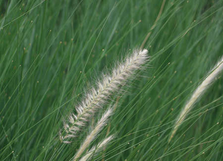 Mini flower grass moving by the wind blowing and green leaves background.
