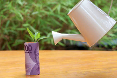 Rolled banknote money ten thousand Indonesia Rupiah and young plant grow up with small white watering can and green nature background. Concept of money growth or currency interest. 写真素材