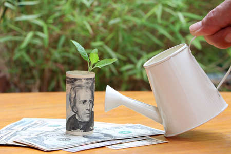 Rolled banknote money twenty US dollar with young plant grow up on the stack of money and small white watering can on hand and green nature background. Concept of money growth or currency interest. 版權商用圖片
