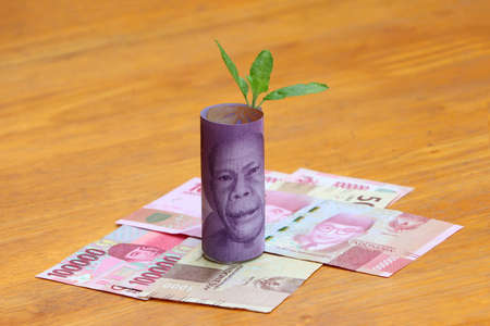 Rolled banknote money ten thousand Indonesia Rupiah with young plant grow up on the stack of money at the green nature background. Concept of money growth or currency interest.