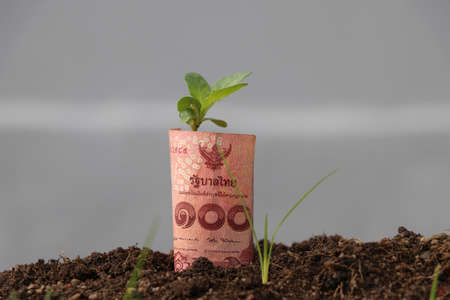 Rolled one hundred baht banknote of Thailand and young plant grow up from the soil. Concept of money growth or currency interest. Stockfoto