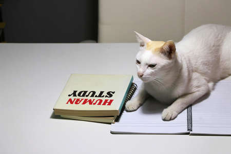 White cat laying down on the notebook with human study book beside the cat on the table. The concept That cats are studying about people.