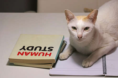 White cat laying down on the notebook with human study book beside the cat on the table. The concept That cats are studying about people. Stock Photo