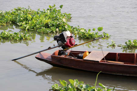 Long tail wooden boat parked in the river surrounded by water hyacinths.