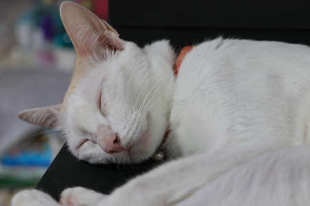 A white cat sleeping with the eyes closed on a black box.