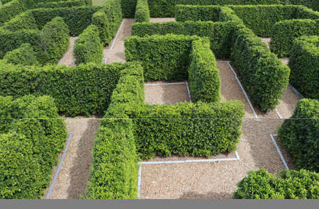 Green plant tree maze wall. Labyrinth maze garden. Build from the tree forming a wall in the park.