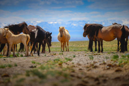 Beautiful horses in the field on blue sky background.