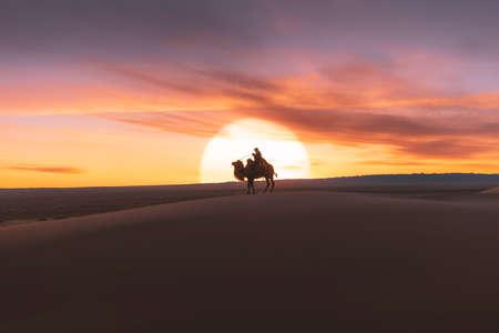 Gobi desert, may 2019, Mongolia : Camel going through the sand dunes on sunrise, Gobi desert Mongolia.
