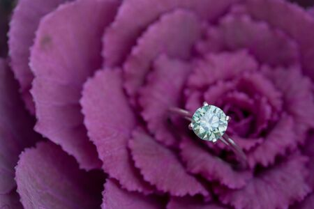 Diamant-Verlobungsring auf lila Blume Standard-Bild