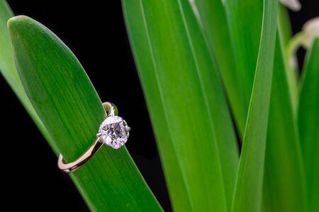 Diamond Ring on Green Leaf Stock Photo
