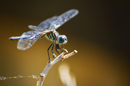 Dragon Fly On A Reed Imagens