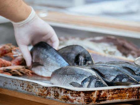 Fresh organic sea bream or dorada. Man hand with gloves put fish that preserved on ice for freshness at restaurant in street market at Montenegro. Seafood market. Soft focus. Mediterranean seafood. 写真素材