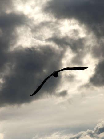 flew: seagull on the horizon