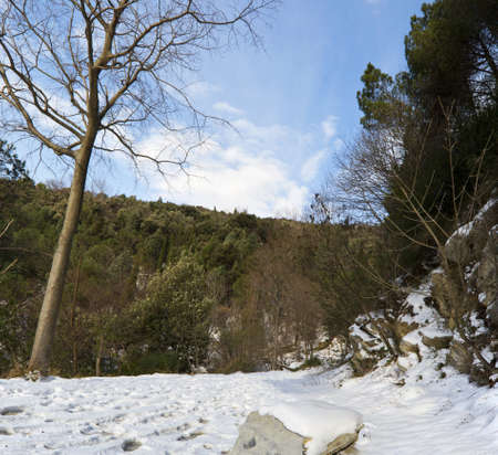 Path through the winter woods, photo