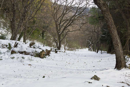 snow-covered forest floor photo