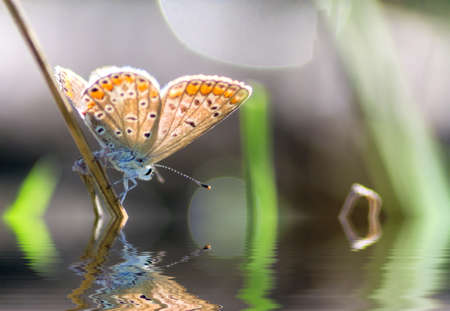 butterflay reflected in the pond photo