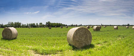 cultivated: Bale of hay in a cultivated field