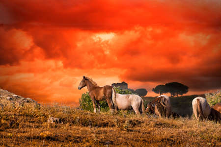horses grazing at sunset Archivio Fotografico