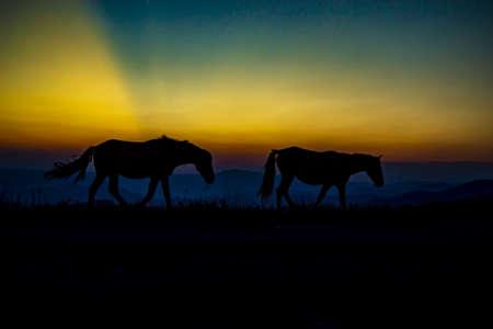 horse walks to the horizon