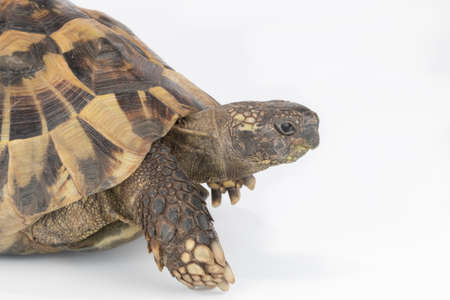 species of creeper: Closeup tortoise head Stock Photo