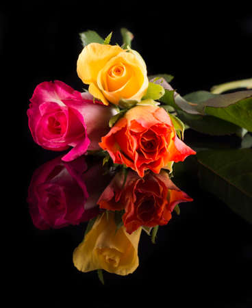 Three roses, yellow, orange and pink on shiny black floor, isolated on black background Stock fotó